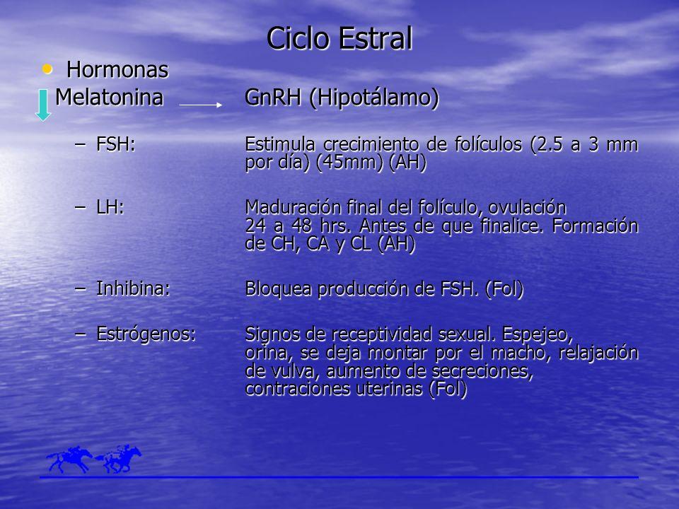 Ciclo Estral Hormonas Hormonas –Progesterona:Inhibe conducta de estro, prepara al útero para la gestación.