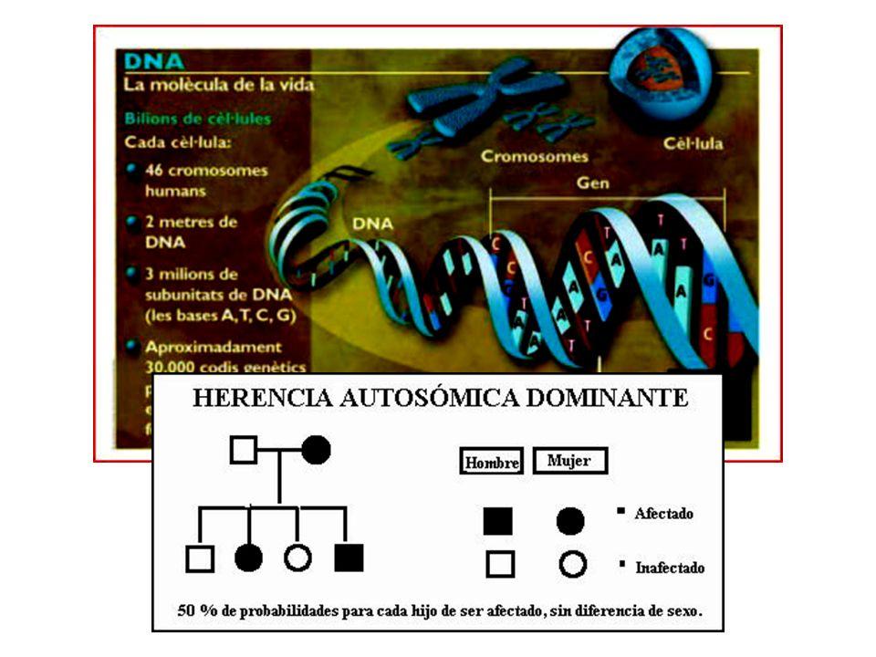 SCA (iniciales del inglés Spino Cerebellar Ataxia), es una nominación, relativamente, reciente.