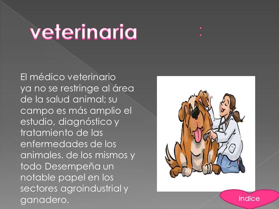 El médico veterinario ya no se restringe al área de la salud animal; su campo es más amplio el estudio, diagnóstico y tratamiento de las enfermedades
