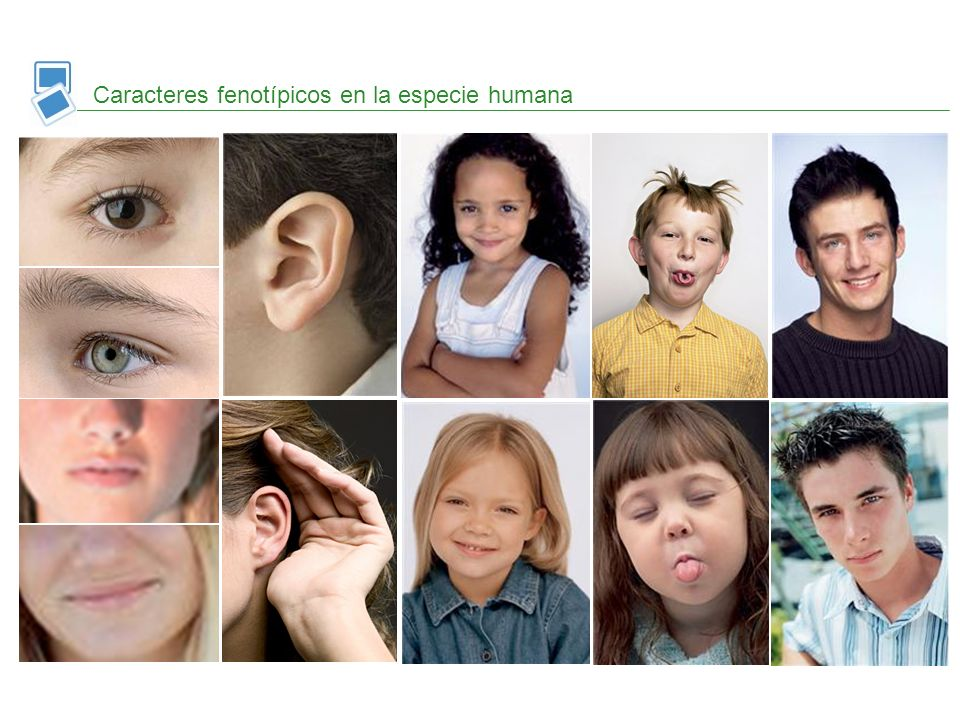 Caracteres fenotípicos en la especie humana