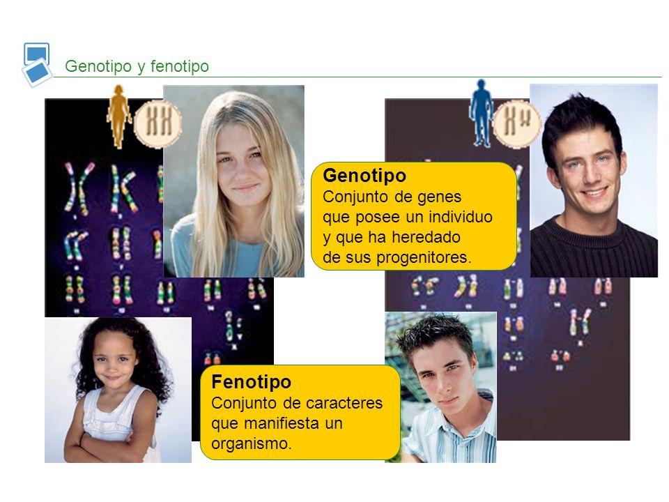 Genotipo y fenotipo Genotipo Conjunto de genes que posee un individuo y que ha heredado de sus progenitores. Fenotipo Conjunto de caracteres que manif