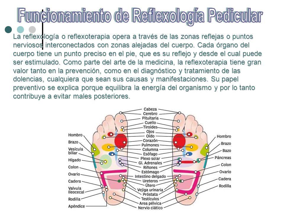 La reflexología o reflexoterapia opera a través de las zonas reflejas o puntos nerviosos interconectados con zonas alejadas del cuerpo. Cada órgano de