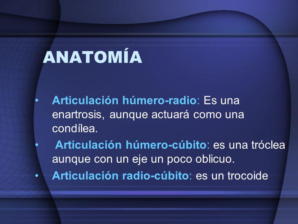 ANATOMÍA Articulación húmero-radio: Es una enartrosis, aunque actuará como una condílea. Articulación húmero-cúbito: es una tróclea aunque con un eje