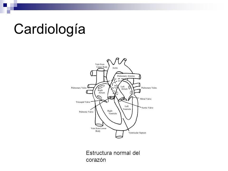 Cardiología Estructura normal del corazón