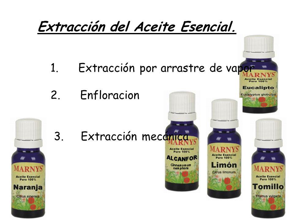 Extracción del Aceite Esencial. 1. Extracción por arrastre de vapor 2. Enfloracion 3. Extracción mecánica