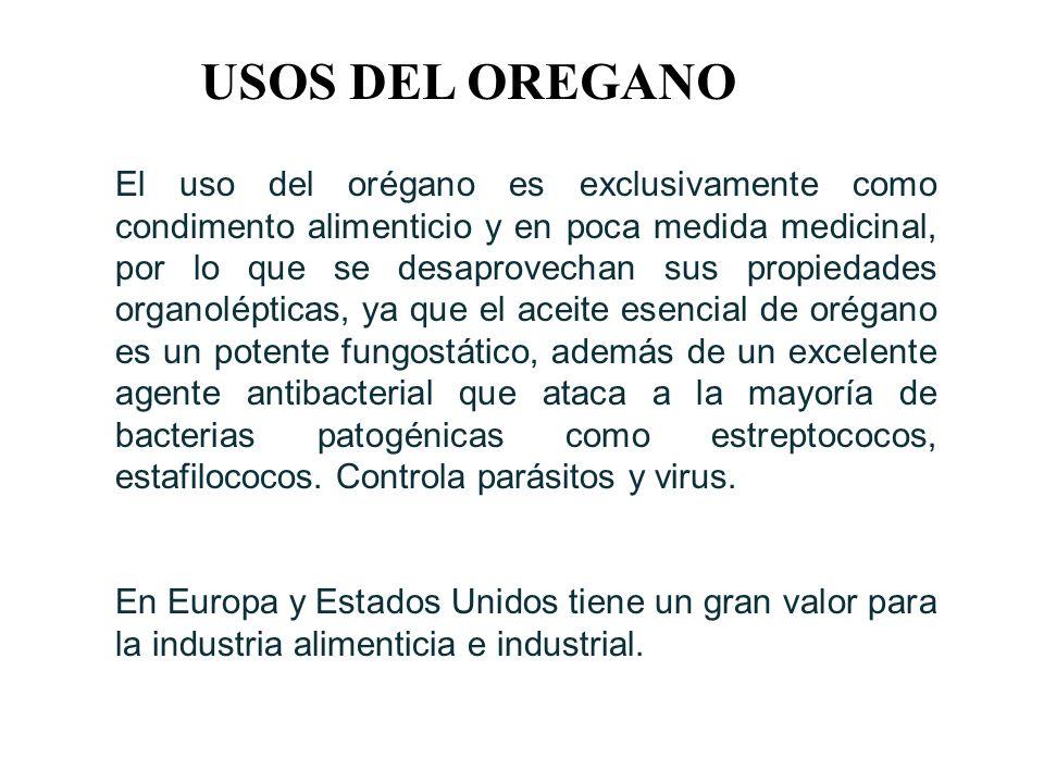 USOS DEL OREGANO El uso del orégano es exclusivamente como condimento alimenticio y en poca medida medicinal, por lo que se desaprovechan sus propieda