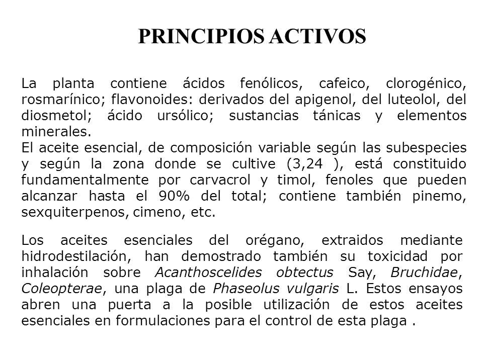 PRINCIPIOS ACTIVOS La planta contiene ácidos fenólicos, cafeico, clorogénico, rosmarínico; flavonoides: derivados del apigenol, del luteolol, del dios