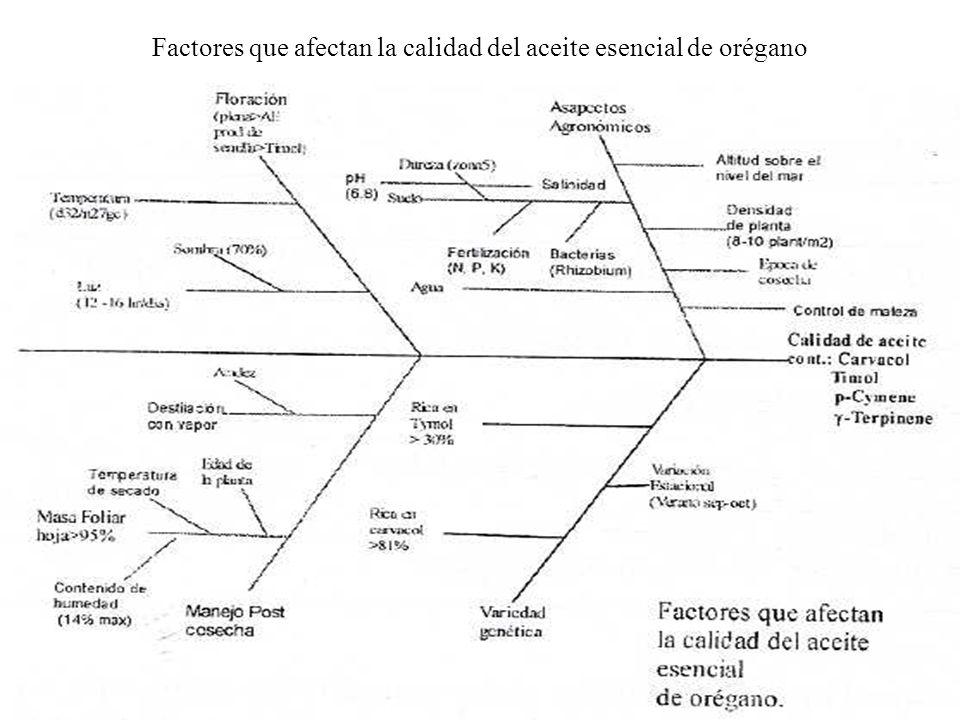 Factores que afectan la calidad del aceite esencial de orégano