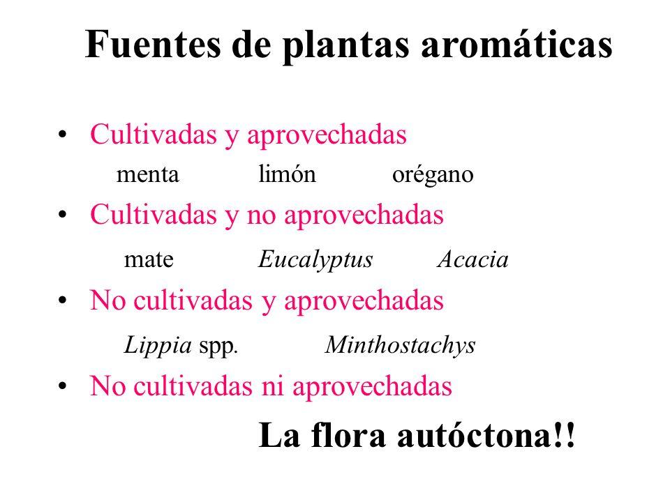 Fuentes de plantas aromáticas Cultivadas y aprovechadas mentalimónorégano Cultivadas y no aprovechadas mateEucalyptus Acacia No cultivadas y aprovecha