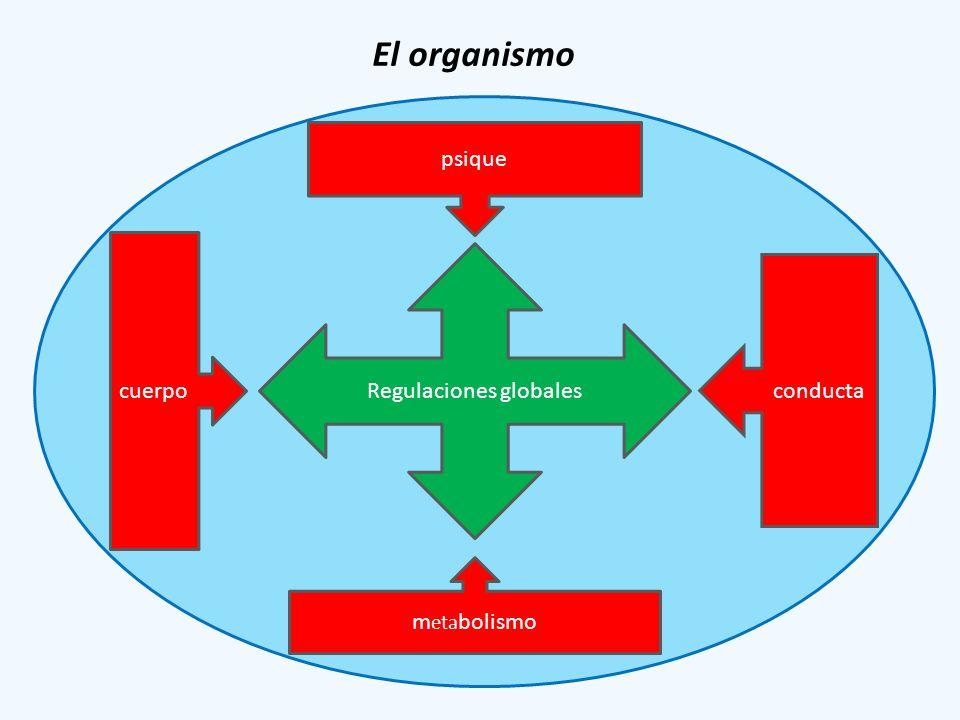 El organismo Regulaciones globales psique cuerpo conducta m eta bolismo