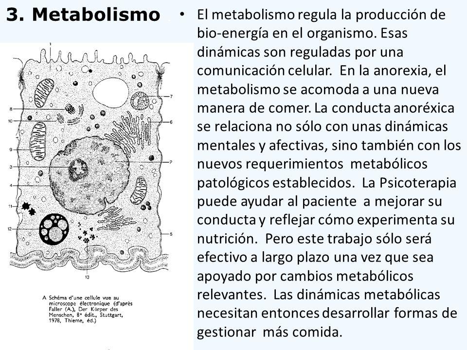 El metabolismo regula la producción de bio-energía en el organismo. Esas dinámicas son reguladas por una comunicación celular. En la anorexia, el meta