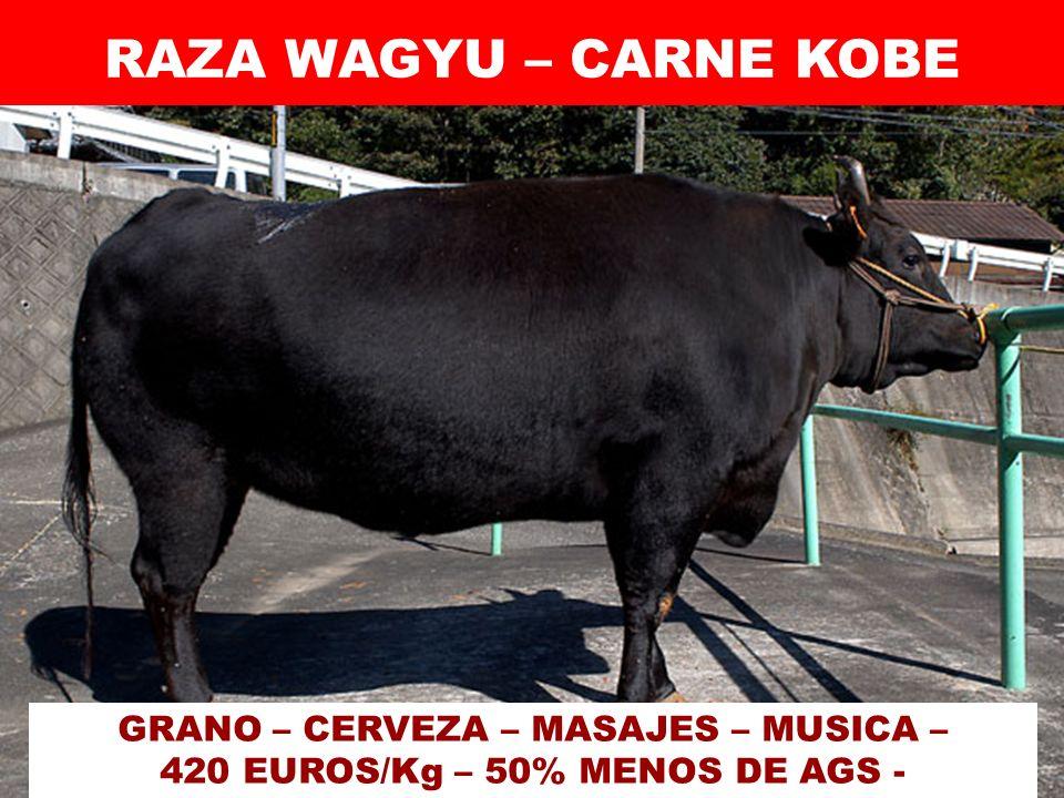 RAZA WAGYU – CARNE KOBE GRANO – CERVEZA – MASAJES – MUSICA – 420 EUROS/Kg – 50% MENOS DE AGS -