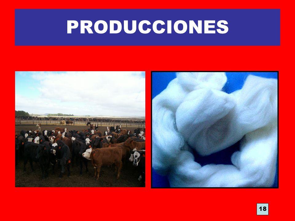 PRODUCCIONES 18