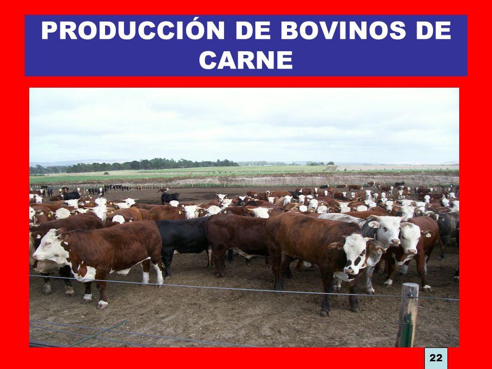 PRODUCCIÓN DE BOVINOS DE CARNE 22