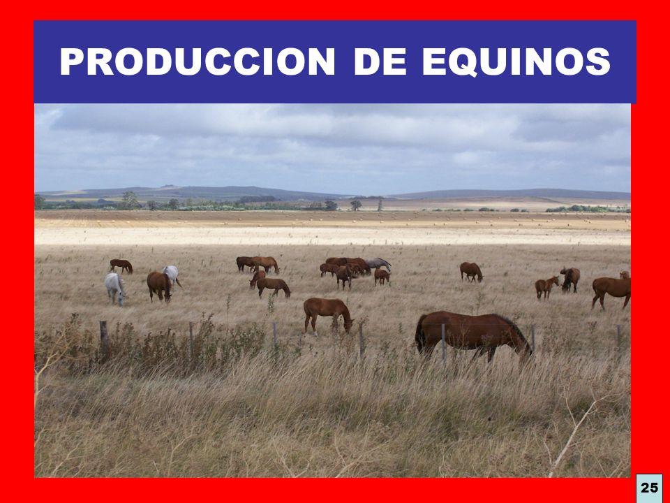 PRODUCCION DE EQUINOS 25
