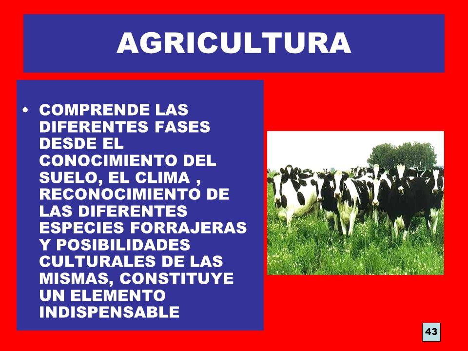 AGRICULTURA COMPRENDE LAS DIFERENTES FASES DESDE EL CONOCIMIENTO DEL SUELO, EL CLIMA, RECONOCIMIENTO DE LAS DIFERENTES ESPECIES FORRAJERAS Y POSIBILID