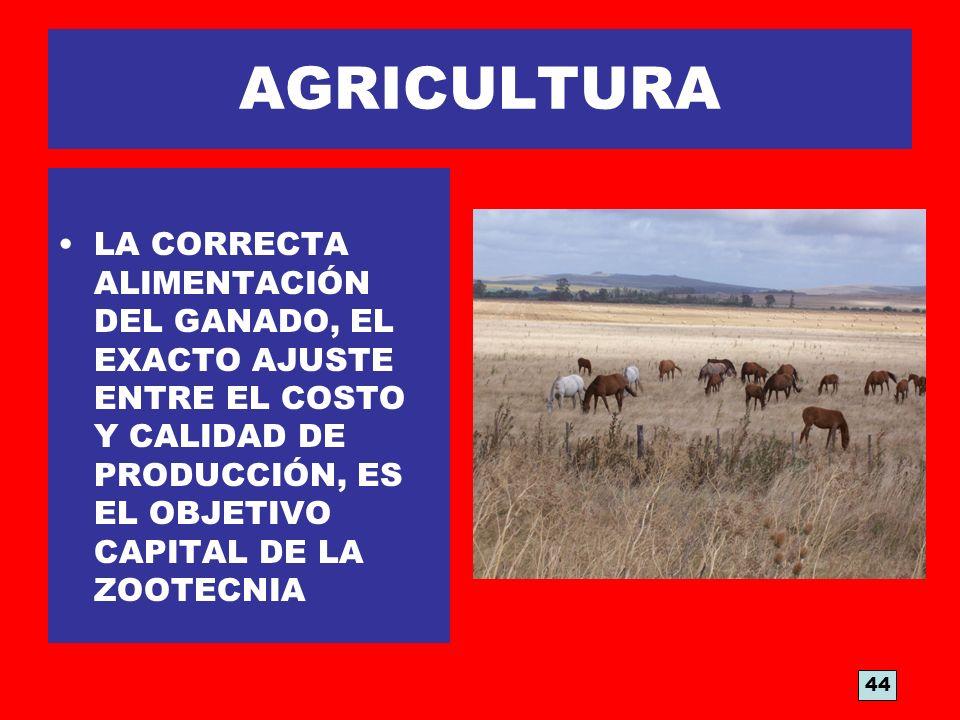 AGRICULTURA LA CORRECTA ALIMENTACIÓN DEL GANADO, EL EXACTO AJUSTE ENTRE EL COSTO Y CALIDAD DE PRODUCCIÓN, ES EL OBJETIVO CAPITAL DE LA ZOOTECNIA 44