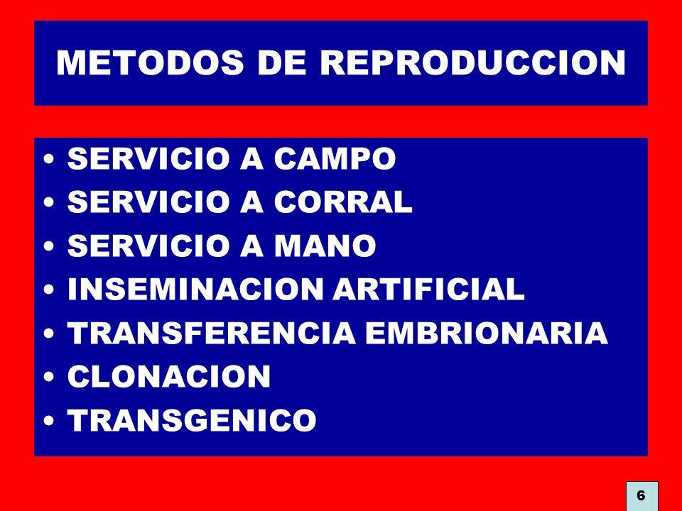 METODOS DE REPRODUCCION SERVICIO A CAMPO SERVICIO A CORRAL SERVICIO A MANO INSEMINACION ARTIFICIAL TRANSFERENCIA EMBRIONARIA CLONACION TRANSGENICO 6