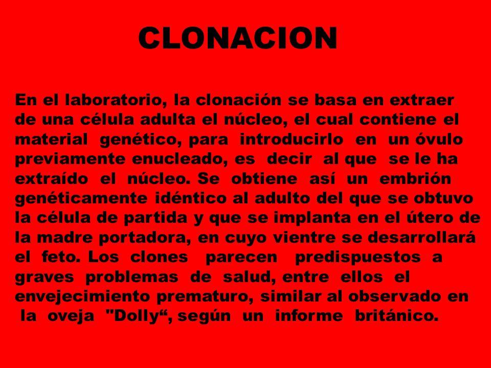En el laboratorio, la clonación se basa en extraer de una célula adulta el núcleo, el cual contiene el material genético, para introducirlo en un óvul