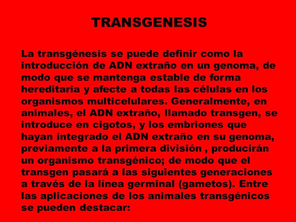 La transgénesis se puede definir como la introducción de ADN extraño en un genoma, de modo que se mantenga estable de forma hereditaria y afecte a tod