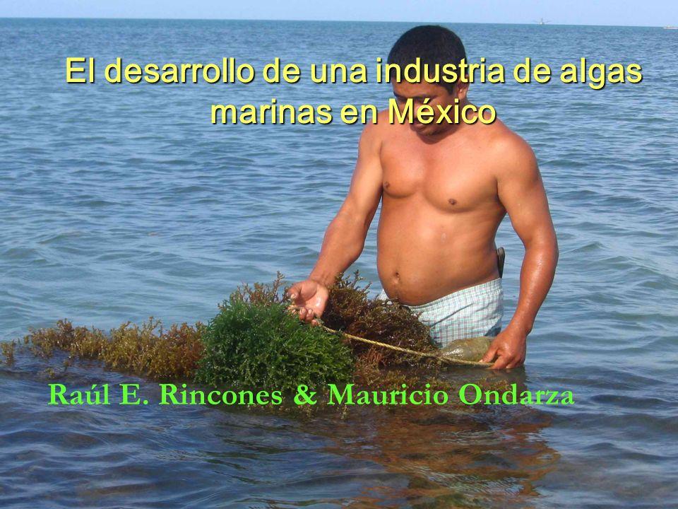 El desarrollo de una industria de algas marinas en México Raúl E. Rincones & Mauricio Ondarza