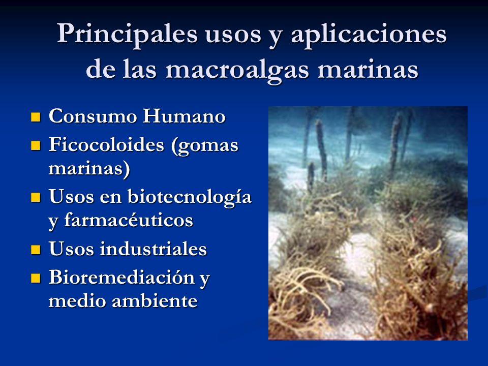 Principales usos y aplicaciones de las macroalgas marinas Consumo Humano Consumo Humano Ficocoloides (gomas marinas) Ficocoloides (gomas marinas) Usos