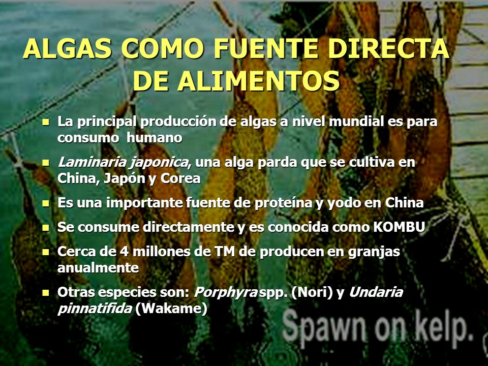 La principal producción de algas a nivel mundial es para consumo humano La principal producción de algas a nivel mundial es para consumo humano Lamina