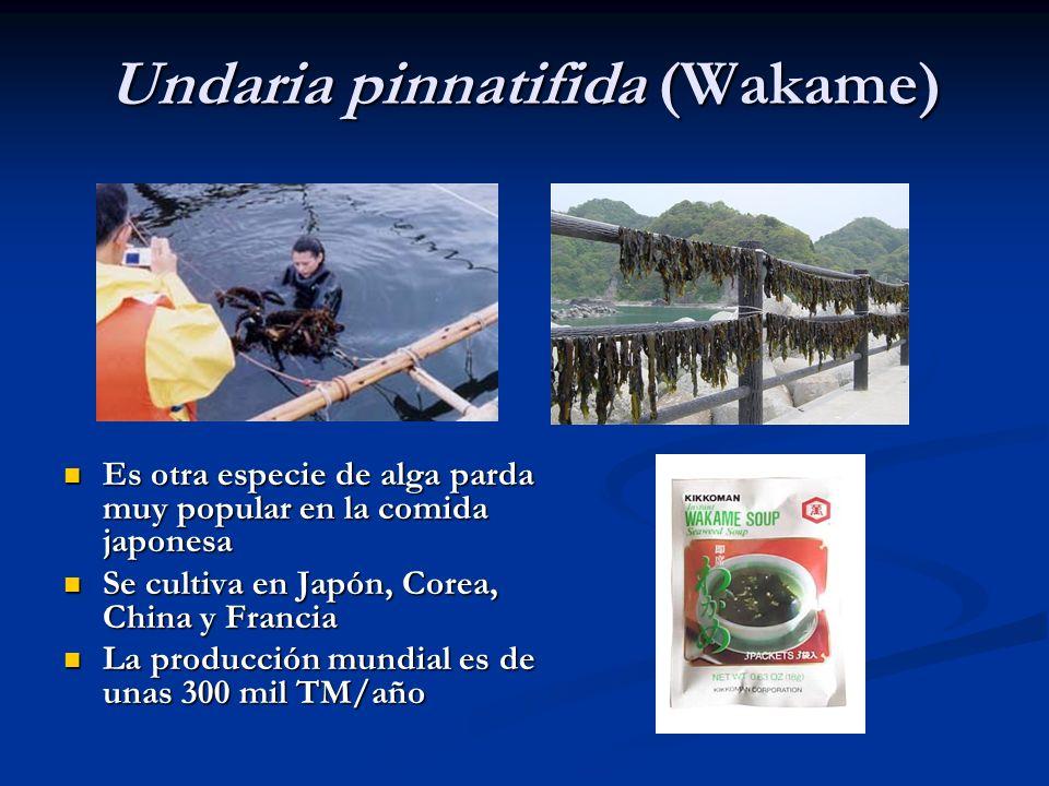 Undaria pinnatifida (Wakame) Es otra especie de alga parda muy popular en la comida japonesa Es otra especie de alga parda muy popular en la comida ja
