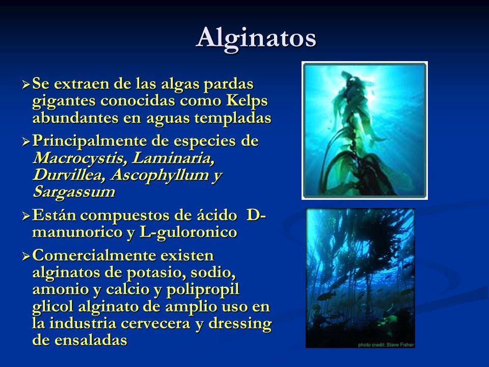 Alginatos Se extraen de las algas pardas gigantes conocidas como Kelps abundantes en aguas templadas Se extraen de las algas pardas gigantes conocidas