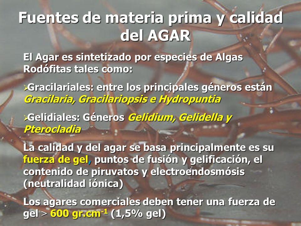 El Agar es sintetizado por especies de Algas Rodófitas tales como: Gracilariales: entre los principales géneros están Gracilaria, Gracilariopsis e Hyd