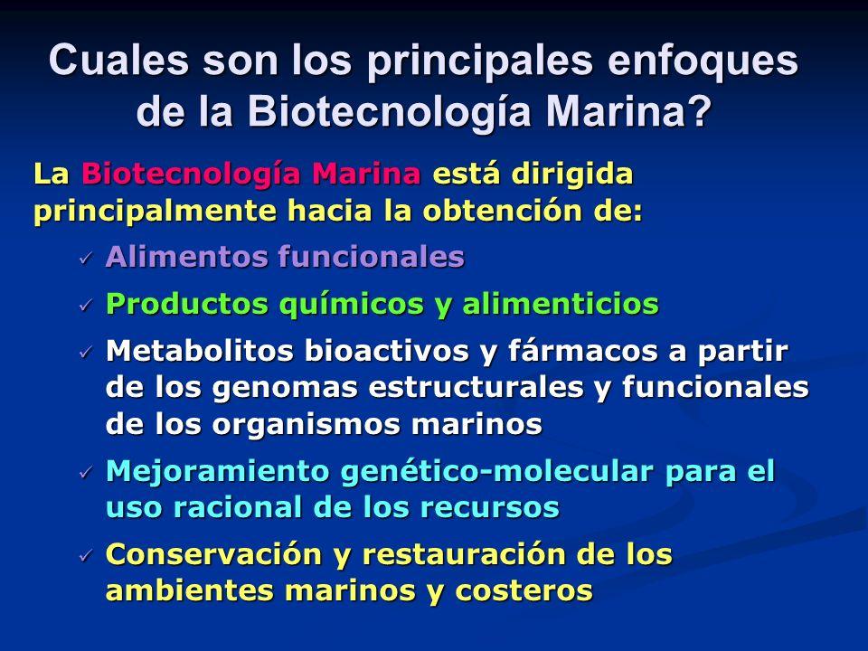 Cuales son los principales enfoques de la Biotecnología Marina? La Biotecnología Marina está dirigida principalmente hacia la obtención de: Alimentos
