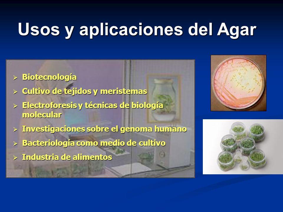 Biotecnología Biotecnología Cultivo de tejidos y meristemas Cultivo de tejidos y meristemas Electroforesis y técnicas de biología molecular Electrofor