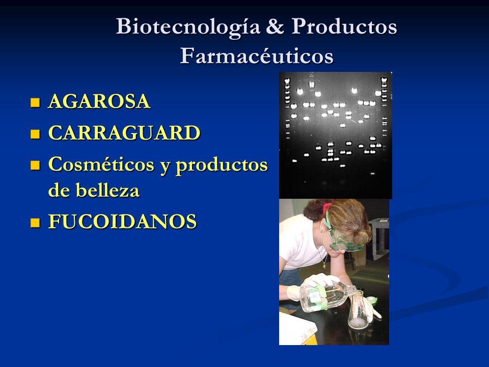 Biotecnología & Productos Farmacéuticos AGAROSA AGAROSA CARRAGUARD CARRAGUARD Cosméticos y productos de belleza Cosméticos y productos de belleza FUCO