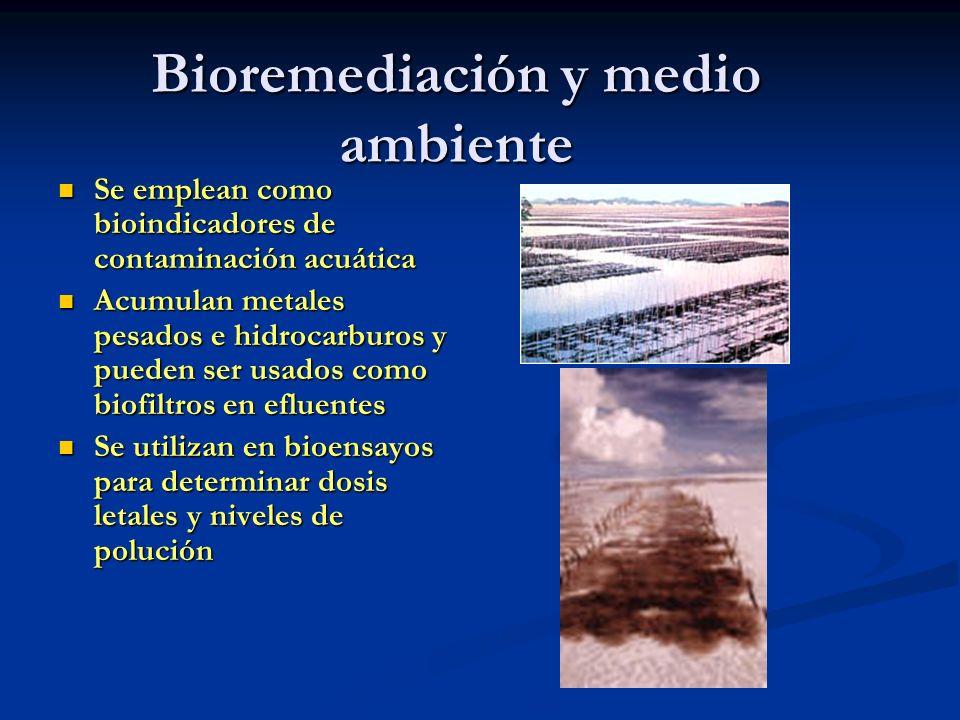Bioremediación y medio ambiente Se emplean como bioindicadores de contaminación acuática Se emplean como bioindicadores de contaminación acuática Acum