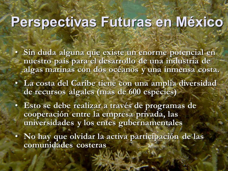 Perspectivas Futuras en México Sin duda alguna que existe un enorme potencial en nuestro país para el desarrollo de una industria de algas marinas con