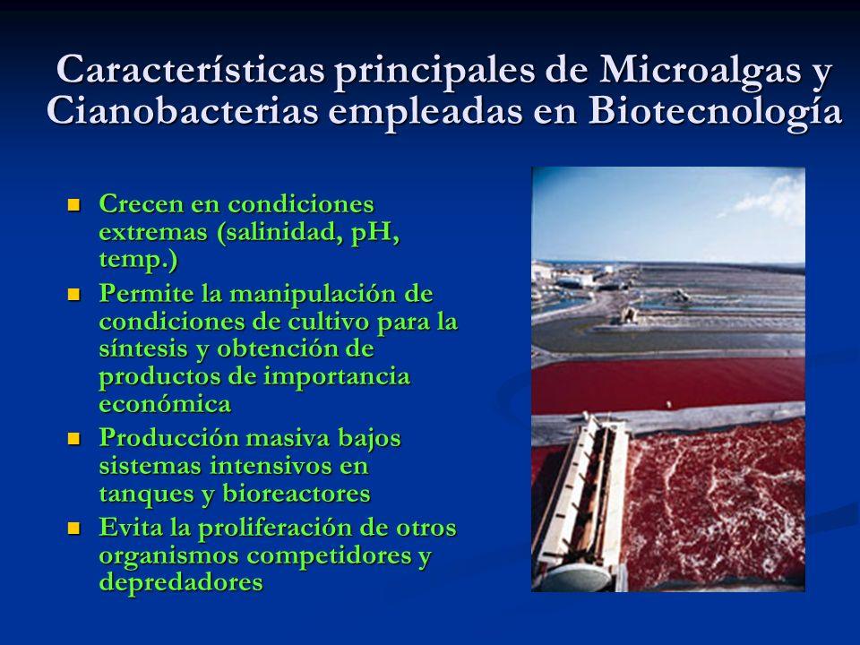 Características principales de Microalgas y Cianobacterias empleadas en Biotecnología Crecen en condiciones extremas (salinidad, pH, temp.) Crecen en