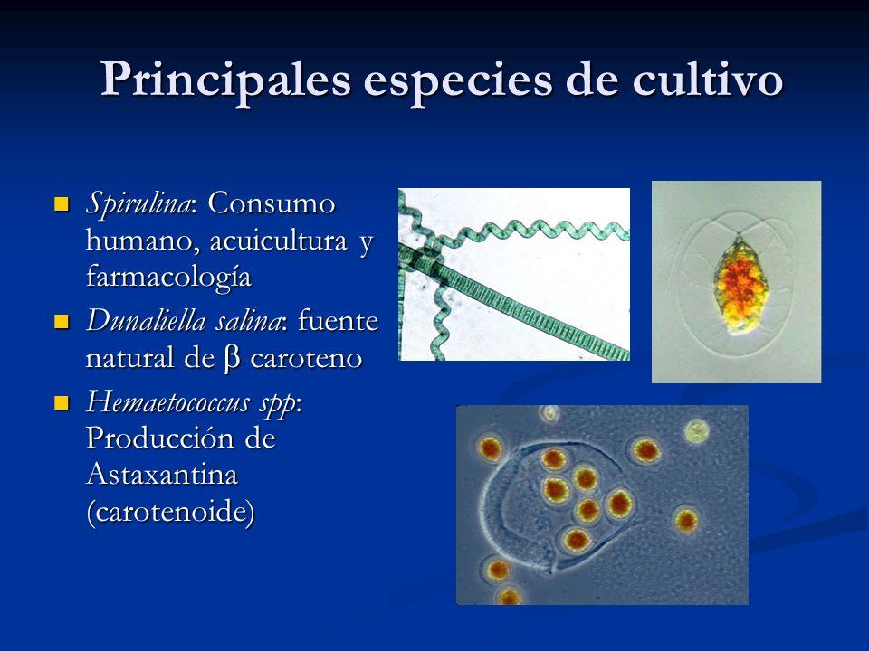 Principales especies de cultivo Spirulina: Consumo humano, acuicultura y farmacología Spirulina: Consumo humano, acuicultura y farmacología Dunaliella