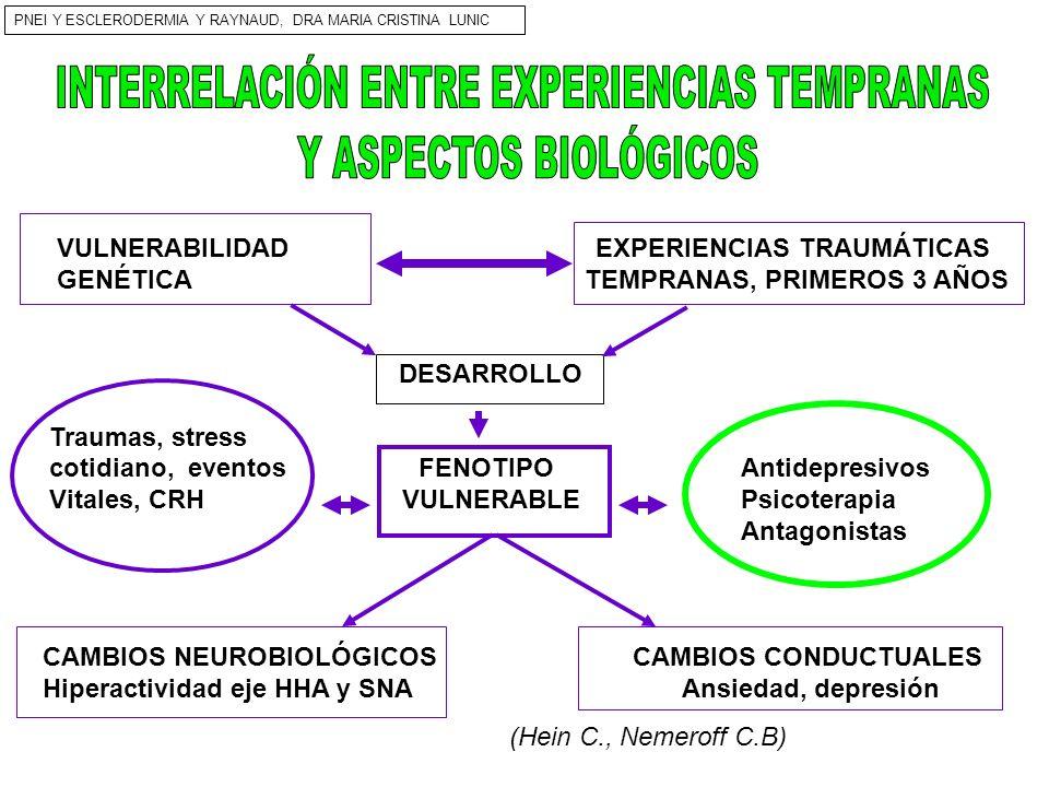 VULNERABILIDAD EXPERIENCIAS TRAUMÁTICAS GENÉTICA TEMPRANAS, PRIMEROS 3 AÑOS DESARROLLO Traumas, stress cotidiano, eventos FENOTIPO Antidepresivos Vita