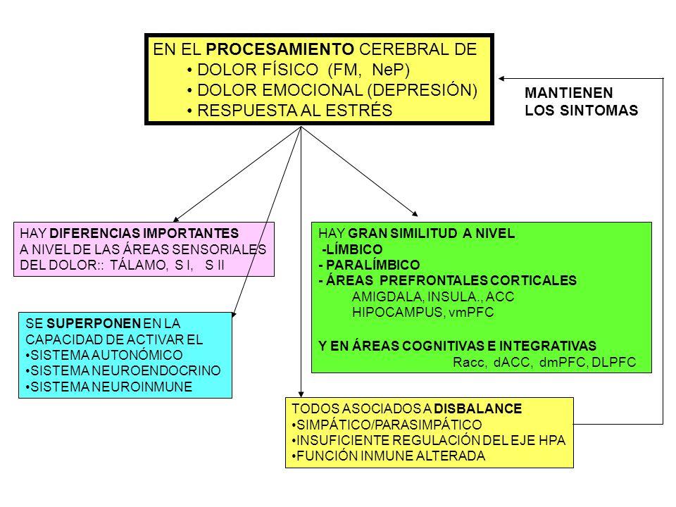 HAY GRAN SIMILITUD A NIVEL -LÍMBICO - PARALÍMBICO - ÁREAS PREFRONTALES CORTICALES AMIGDALA, INSULA., ACC HIPOCAMPUS, vmPFC Y EN ÁREAS COGNITIVAS E INT