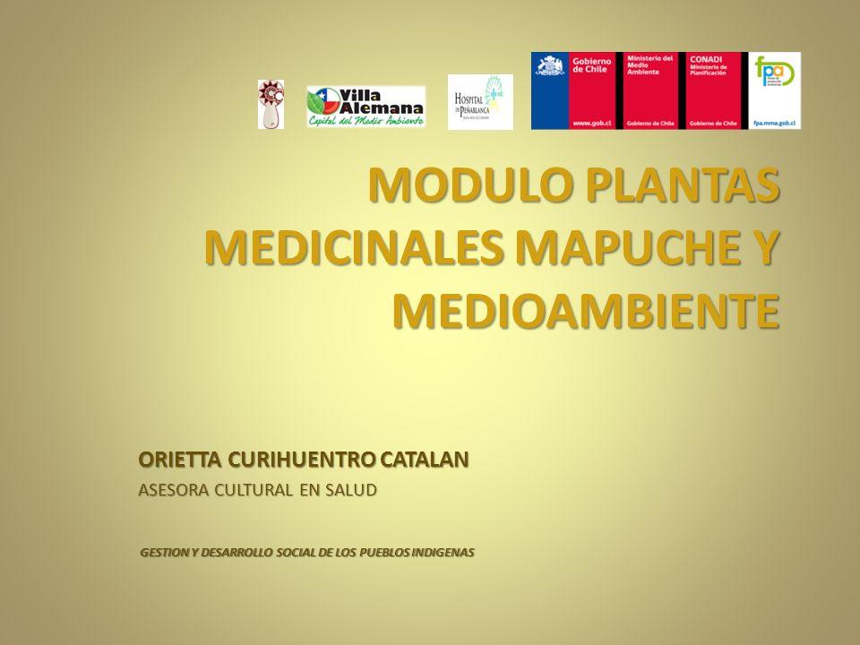 MODULO PLANTAS MEDICINALES MAPUCHE Y MEDIOAMBIENTE ORIETTA CURIHUENTRO CATALAN ASESORA CULTURAL EN SALUD GESTION Y DESARROLLO SOCIAL DE LOS PUEBLOS IN