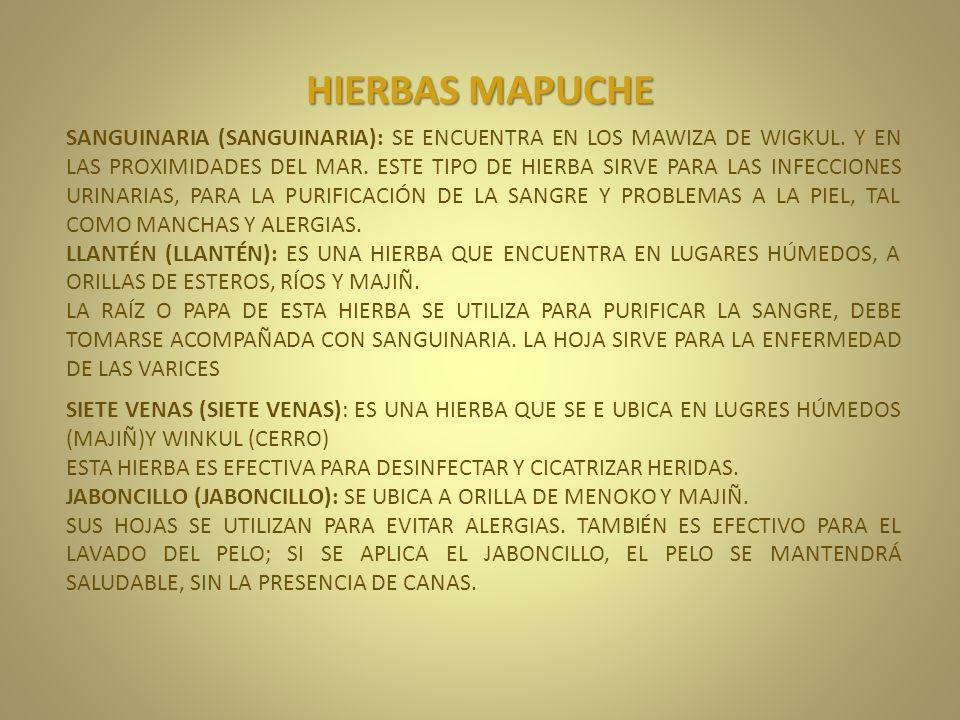 HIERBAS MAPUCHE SANGUINARIA (SANGUINARIA): SE ENCUENTRA EN LOS MAWIZA DE WIGKUL. Y EN LAS PROXIMIDADES DEL MAR. ESTE TIPO DE HIERBA SIRVE PARA LAS INF