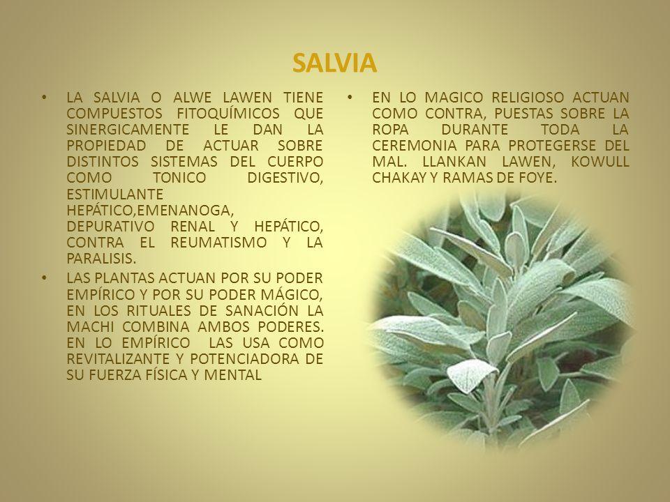 SALVIA LA SALVIA O ALWE LAWEN TIENE COMPUESTOS FITOQUÍMICOS QUE SINERGICAMENTE LE DAN LA PROPIEDAD DE ACTUAR SOBRE DISTINTOS SISTEMAS DEL CUERPO COMO