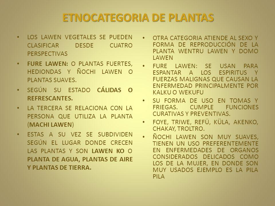 ETNOCATEGORIA DE PLANTAS LOS LAWEN VEGETALES SE PUEDEN CLASIFICAR DESDE CUATRO PERSPECTIVAS FURE LAWEN: O PLANTAS FUERTES, HEDIONDAS Y ÑOCHI LAWEN O P