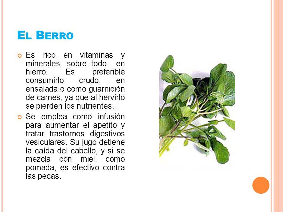 L A H IERBABUENA Tiene propiedades estomacales, carminativas, estimulantes y antisépticas.