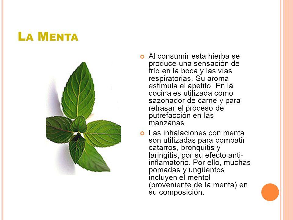 L A M ENTA Al consumir esta hierba se produce una sensación de frío en la boca y las vías respiratorias. Su aroma estimula el apetito. En la cocina es