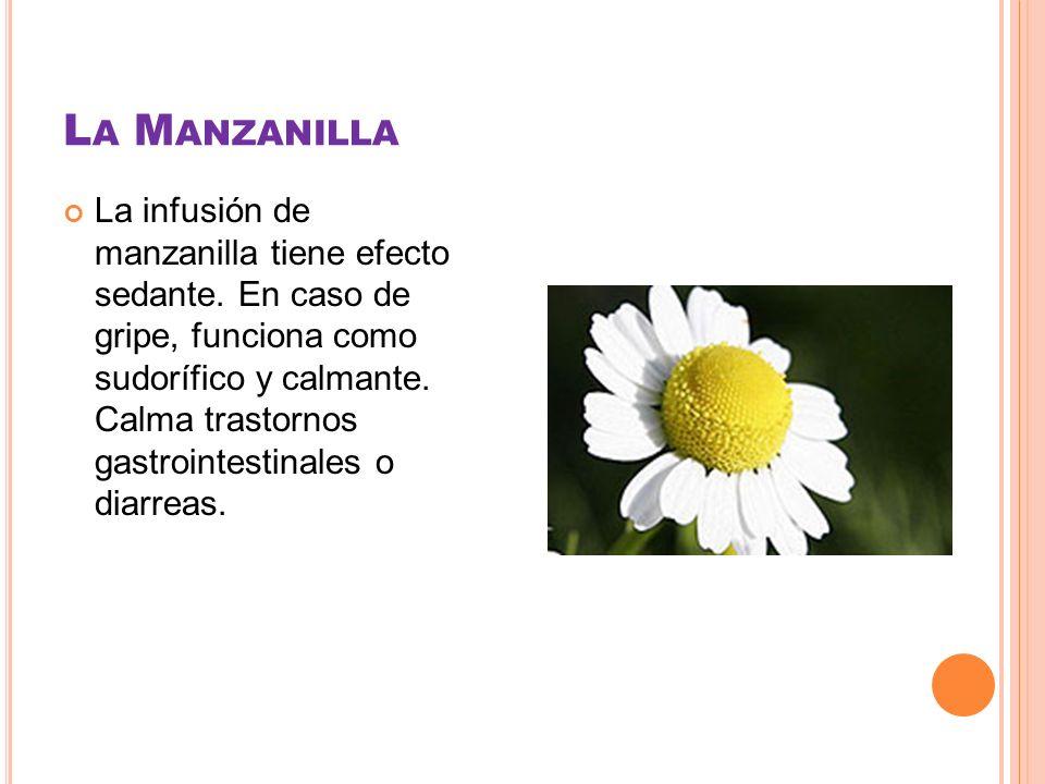 L A M ANZANILLA La infusión de manzanilla tiene efecto sedante. En caso de gripe, funciona como sudorífico y calmante. Calma trastornos gastrointestin
