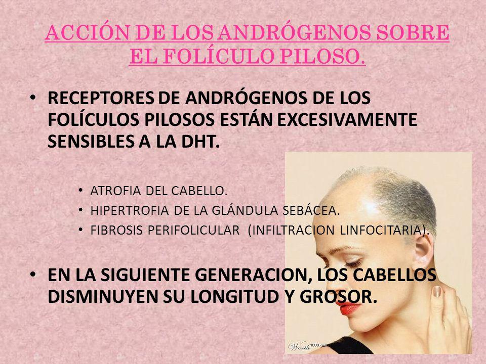 ACCIÓN DE LOS ANDRÓGENOS SOBRE EL FOLÍCULO PILOSO. RECEPTORES DE ANDRÓGENOS DE LOS FOLÍCULOS PILOSOS ESTÁN EXCESIVAMENTE SENSIBLES A LA DHT. ATROFIA D
