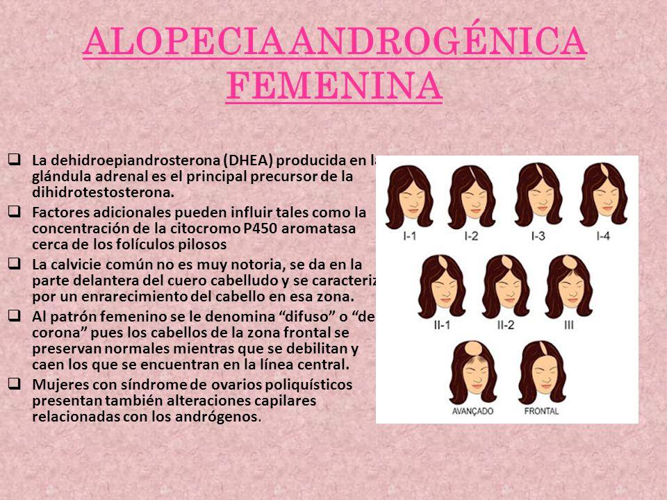 ALOPECIA ANDROGÉNICA FEMENINA La dehidroepiandrosterona (DHEA) producida en la glándula adrenal es el principal precursor de la dihidrotestosterona. F