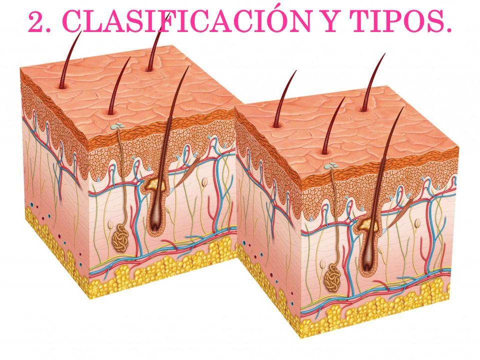 2. CLASIFICACIÓN Y TIPOS.