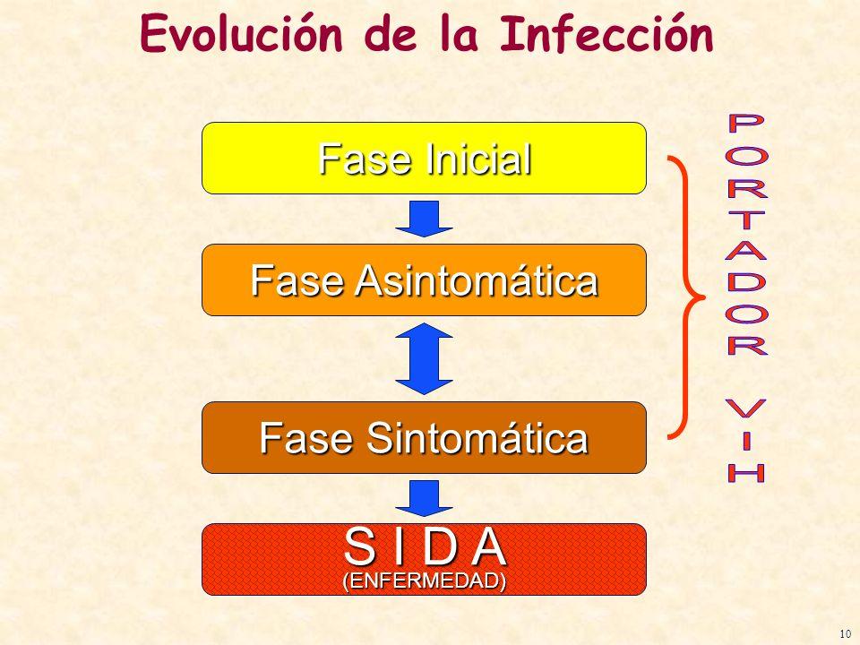 Fase Inicial Fase Asintomática Fase Sintomática S I D A (ENFERMEDAD) Evolución de la Infección 10